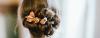 Nahaufnahme von romantischem Chignon mit dekorativen Blumen im brünetten Haar