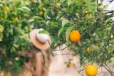 Pečujte o svou pleť s těmito organickými ovocnými ingrediencemi