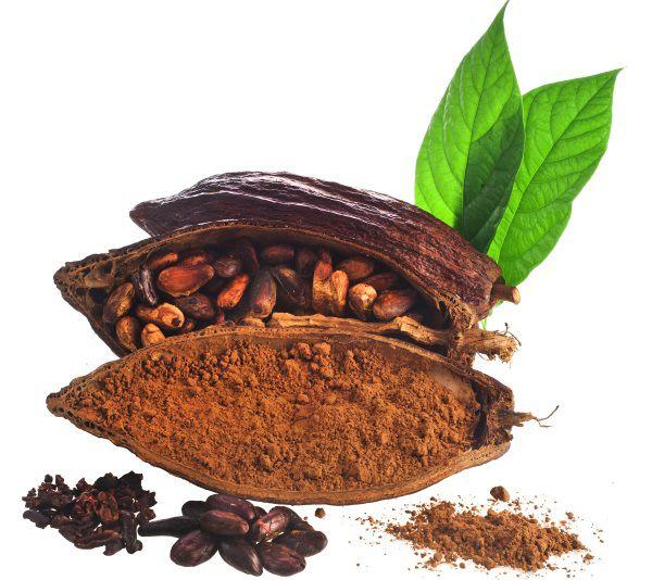 Cosse, fève et poudre de cacao sur fond blanc.