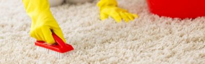 How to Get Stains Out of Carpets and Rugs