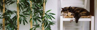 Bambus gießen – Wasserbedarf, Gießhäufigkeit und Pflege im Winter