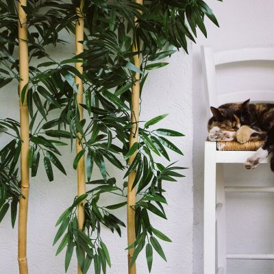 Watering a bamboo plant