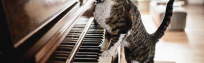 Katze balanciert über Klaviertasten