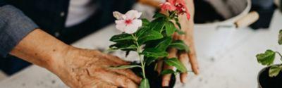 Wie werden Blumen umgetopft?
