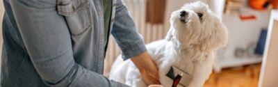 Eine Frau in einem Jeanshemd bürstet einen kleinen Hund