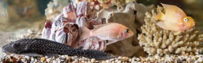Aquarium mit mehreren verschiedenfarbigen Fischen und Korallendeko