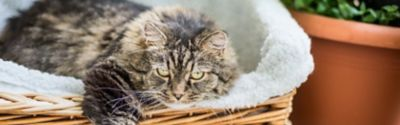Katzenbett reinigen