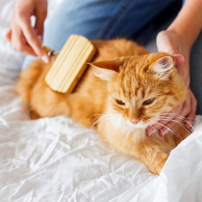 Brown cat being groomed by a grooming brush