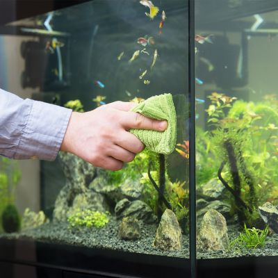 A person cleaning the outer glass of the aquarium