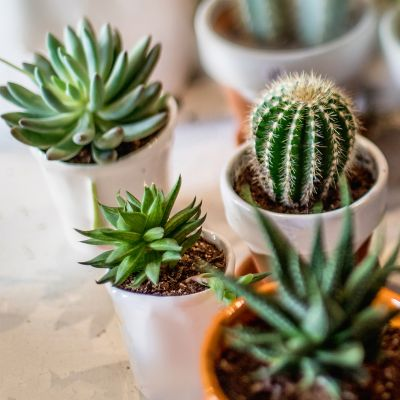 4 succulent plants in mini pots