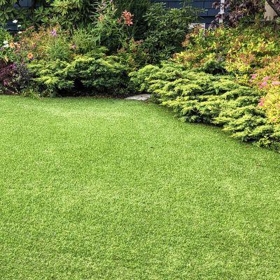 Trawnik na podwórku / w ogrodzie