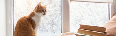 Braune Katze sitzt am Fenster