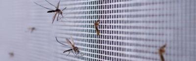 Mücken auf einem Netz