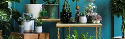 Pflegeleichte Zimmerpflanzen – die Top-Auswahl
