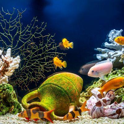 4 Goldfische