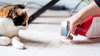 Find trustworthy home cleaning tips that leave nothing behind