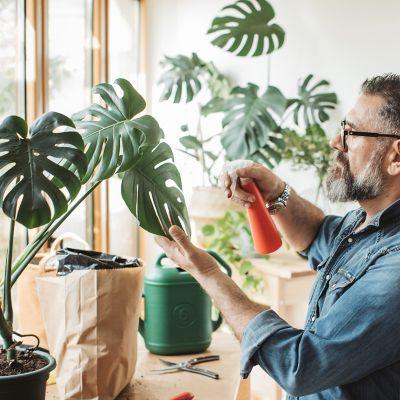 Person sprüht Insektenvernichtungsmittel/Wasser auf Pflanzen