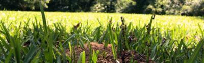 Mrówki w ogrodzie - jak pozbyć się uprzykrzonych szkodników raz na zawsze