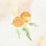 Oil Ultime Mandarin Watercolour Painting