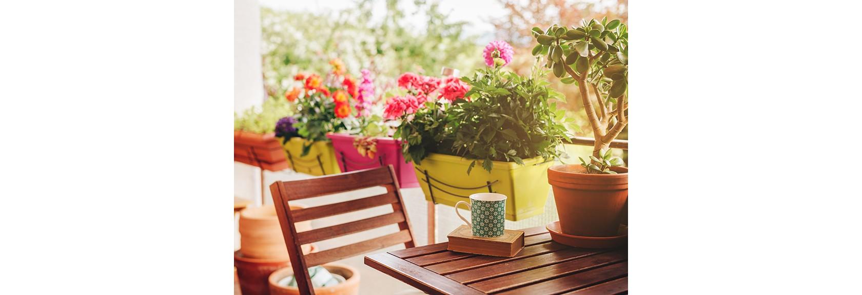 Balkonpflanzen, Balkon mit verschiedenen Blumen und Pflanzen.
