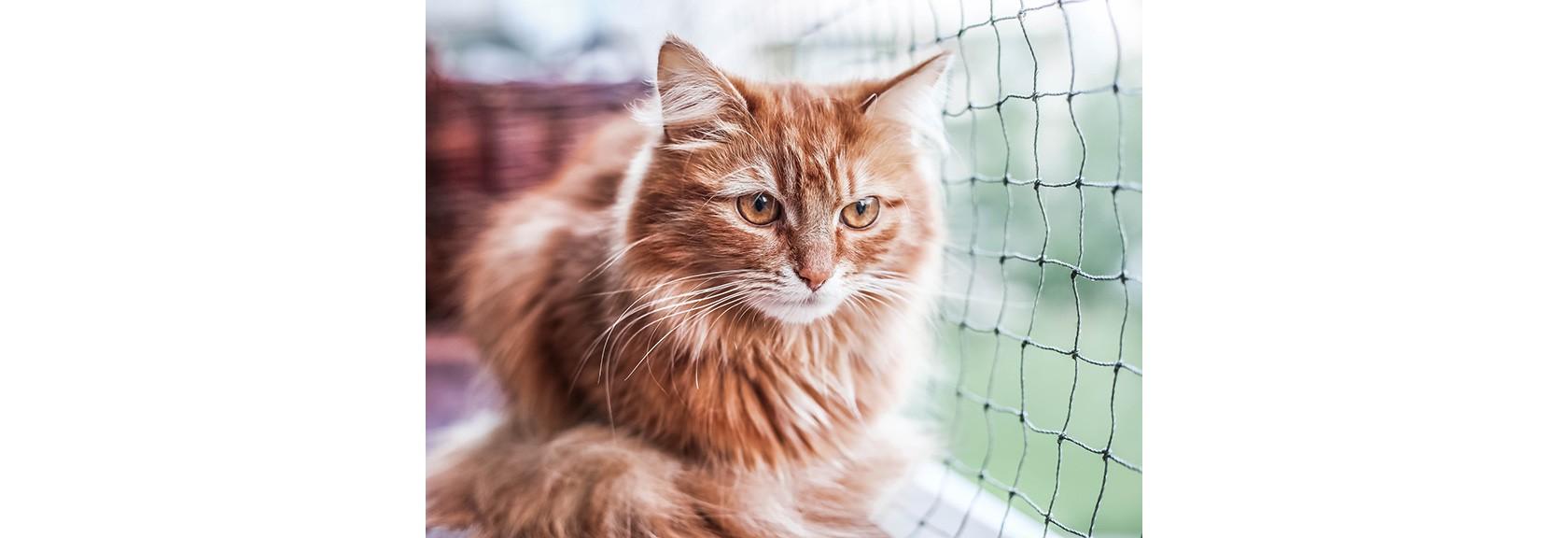 Ein sicherer Balkon für Haustiere. Eine Katze sitzt auf einem Zaun und schaut durch ein Sicherheitsnetz.