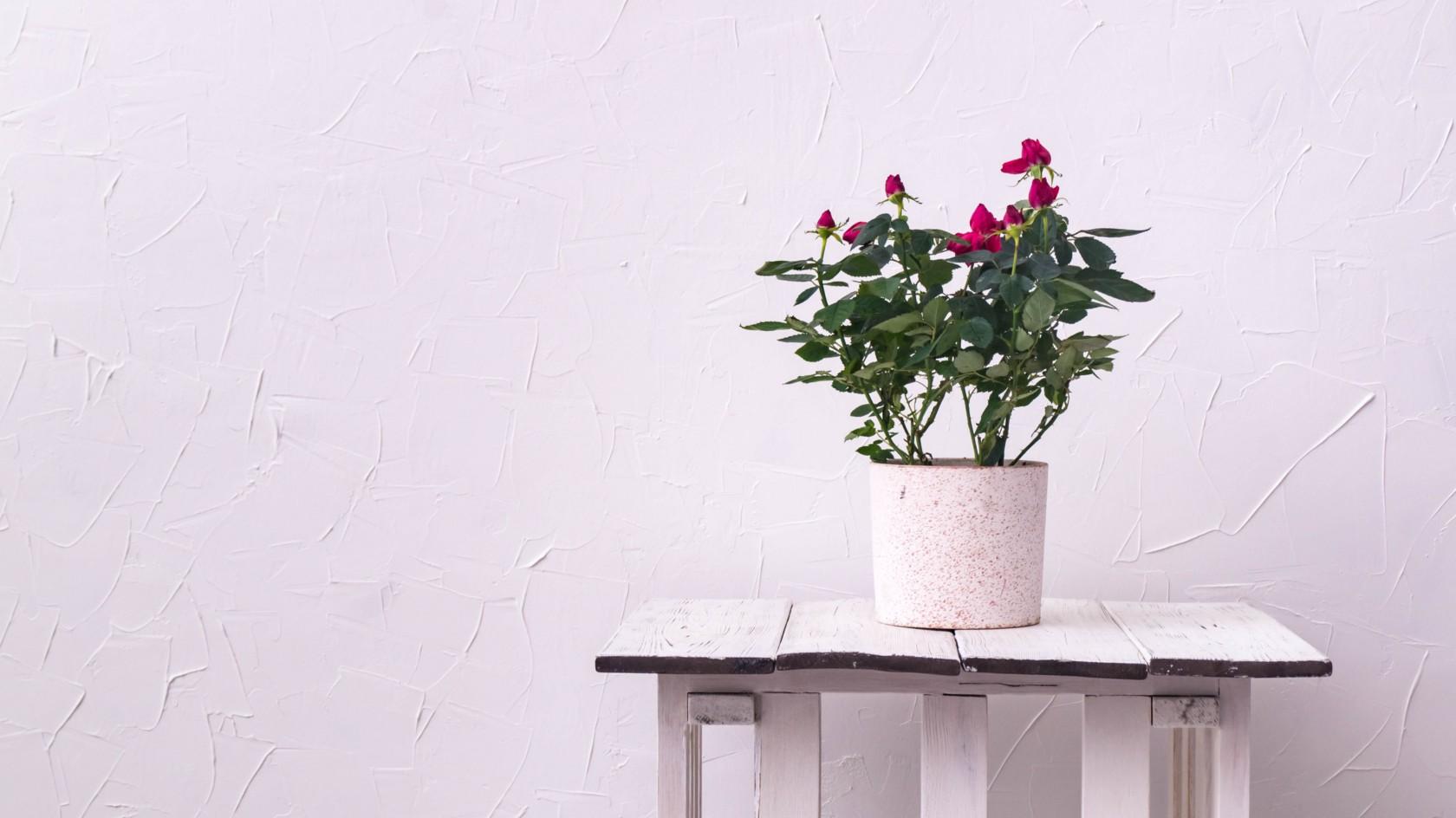 Blumen überwintern, Pflanze steht in einem Topf auf einem Holztisch