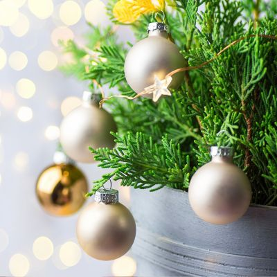 Christmas tree in a pot