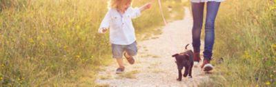 Jak nauczyć psa zasad czystości?
