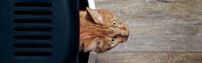 Jak nauczyć czystości kota? W ten sposób kuweta może uszczęśliwić kociaka!