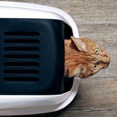Jak nauczyć czystości kota?