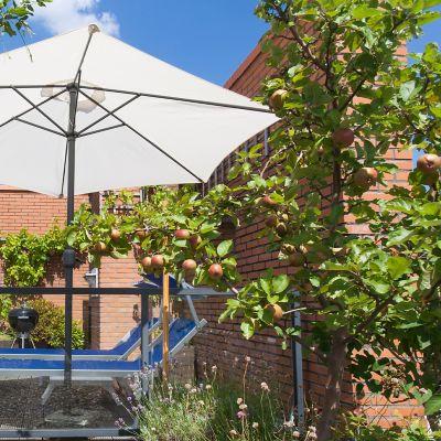 Apfelbaum auf dem Balkon: Alles Wichtige