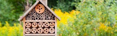 Insektenhotel reinigen: So geht's