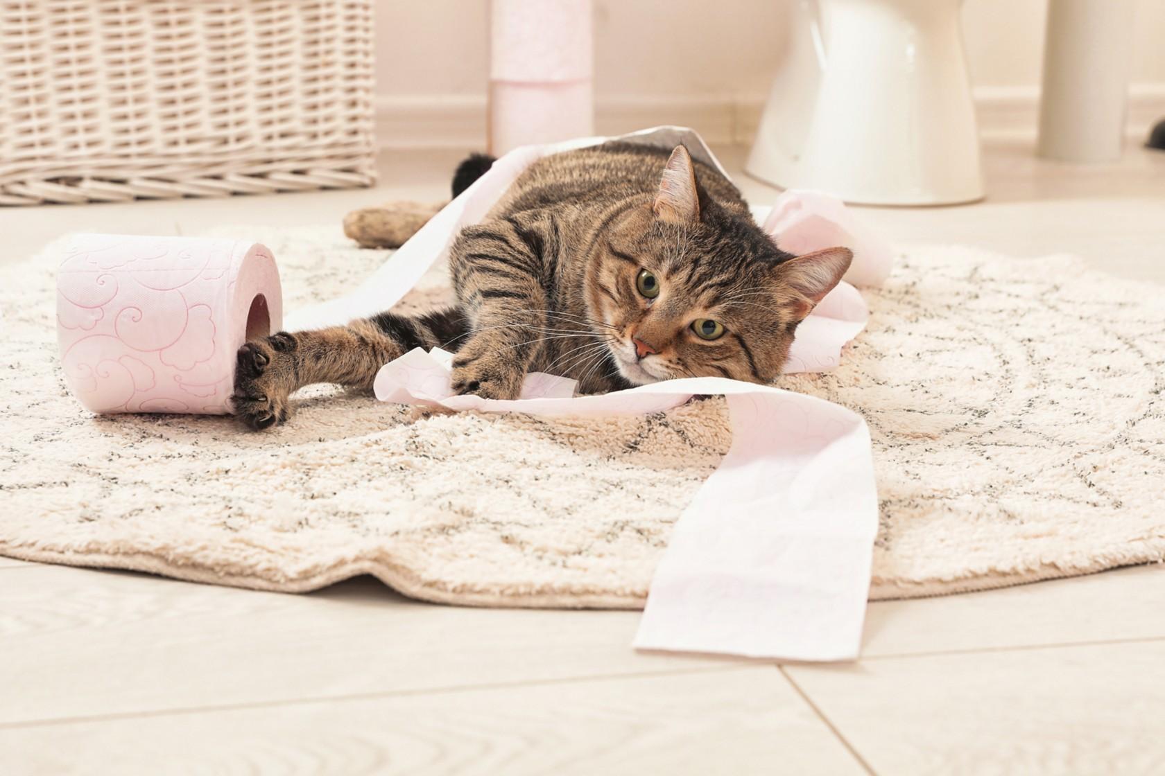 Katzenspielzeug selber machen Klopapier