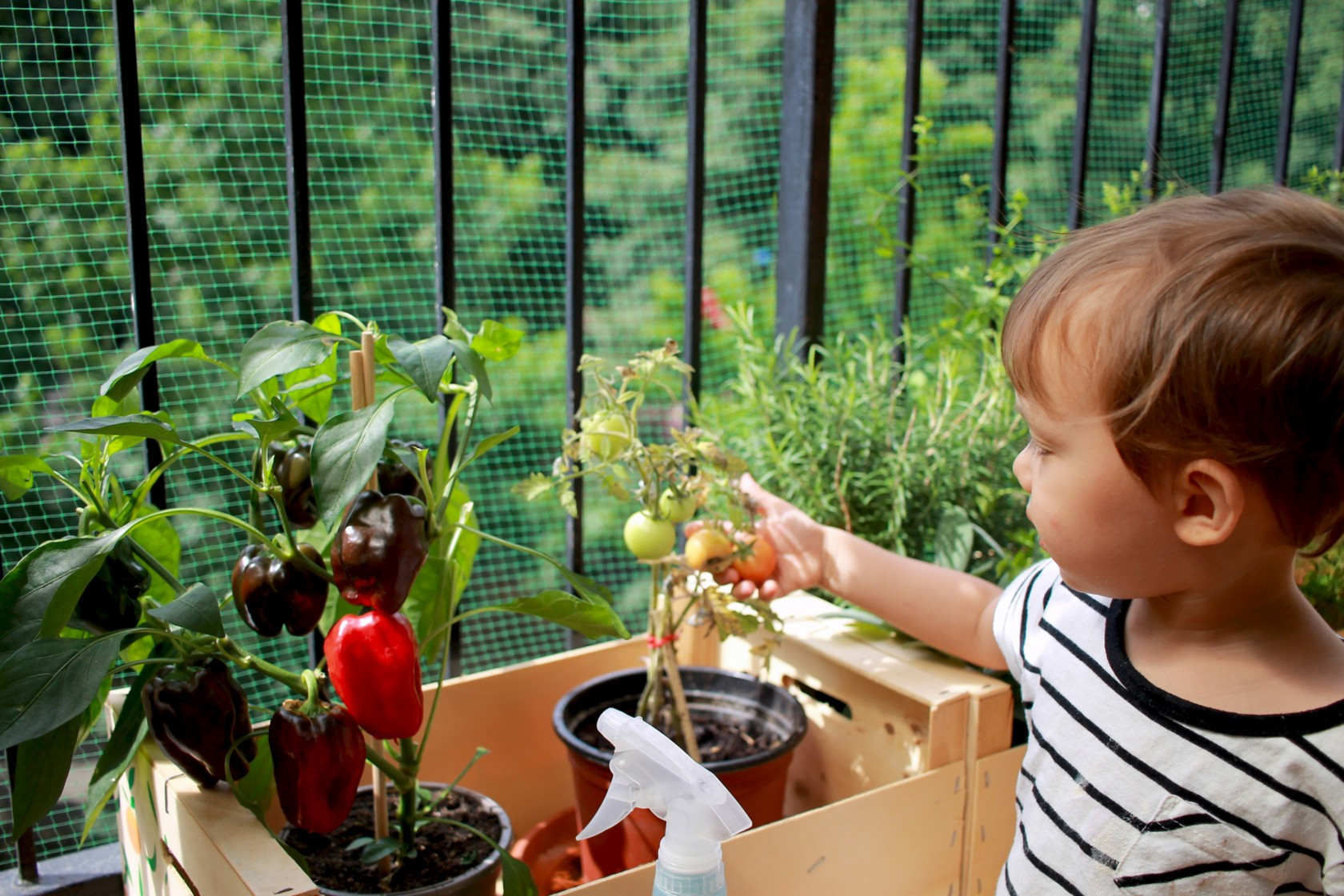 Gemüse auf dem Balkon Kind pflanzt Tomaten in Holzkiste