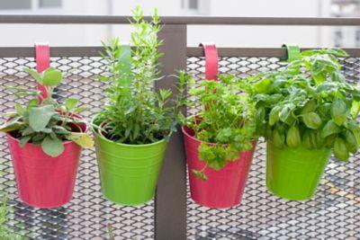 platzsparend hängende Kräuter auf dem Balkon angepflanzt