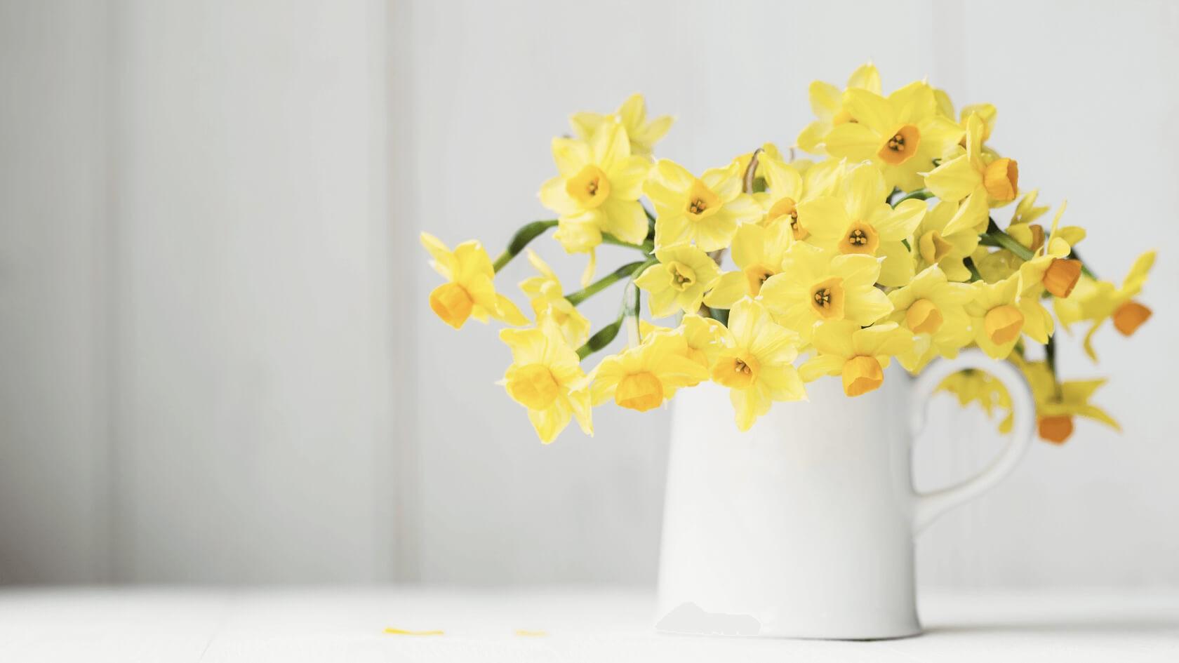 Eine weiße Blumenvase mit gelben Narzissen.