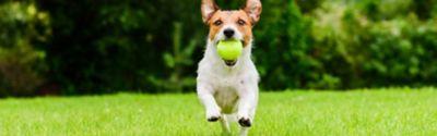 Beseitigung von Hundehaufen im Garten