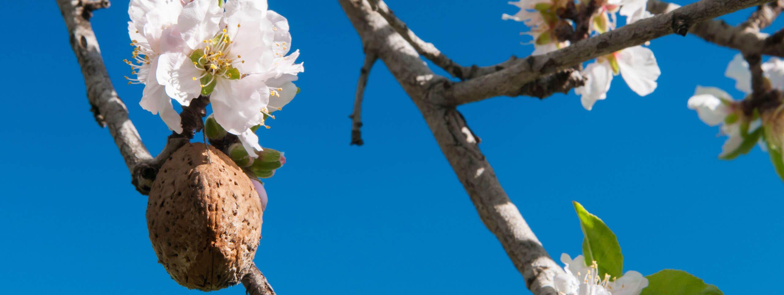 Drzewo z kwiatami