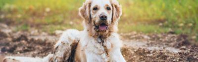 Wie du dein Zuhause mit Hund sauber halten kannst, Hund liegt in einer Schlammpfütze
