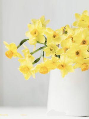 Un vase blanc avec des jonquilles
