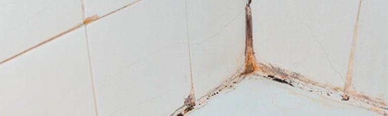Moisissure : Conséquence principale d'un excés d'humidité