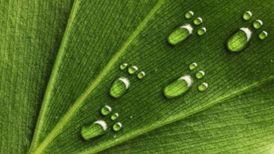 Picături de apă în formă de picioare mici pe o frunză de plantă.