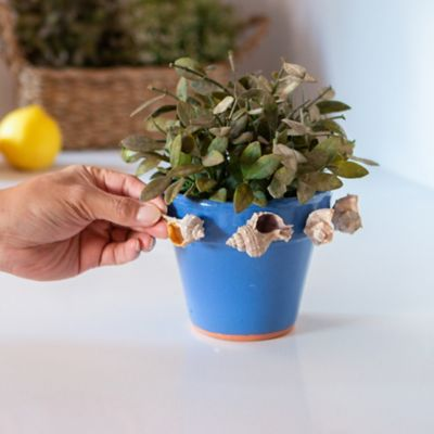 How to make a money tree that won't break the bank
