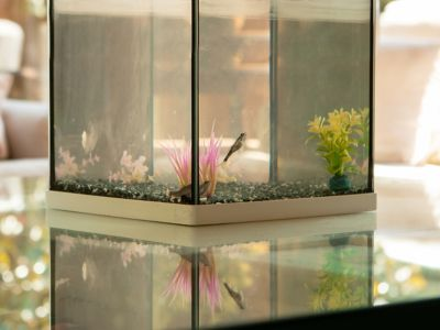 How to fix a leaky fish tank with aquarium silicone